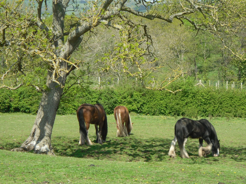 Horse holidays at the Shepherd's Hideaway