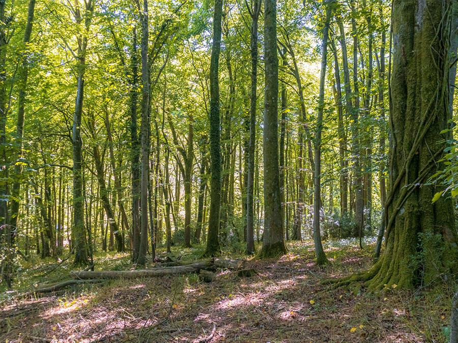 trails at wytch wood- one epic road trip blog