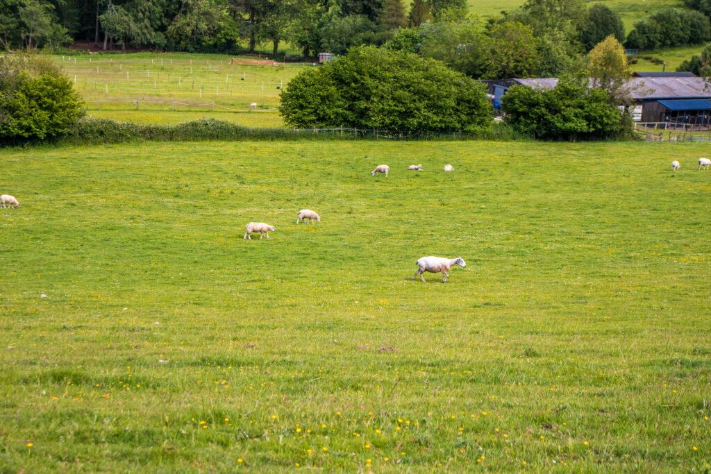 Blackmore farm somerset