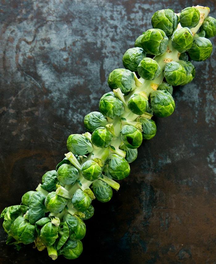 spicy-garlic-brussels-sprouts-stalk-17