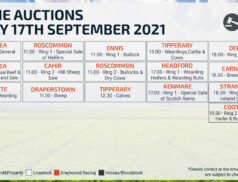 Online Auctions – Friday Calendar 17/09/2021