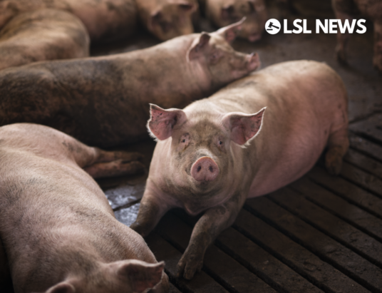 Fast-track work permits to help out the pig sector