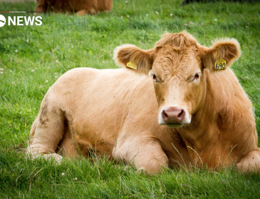 UK beef is banned by China following BSE case