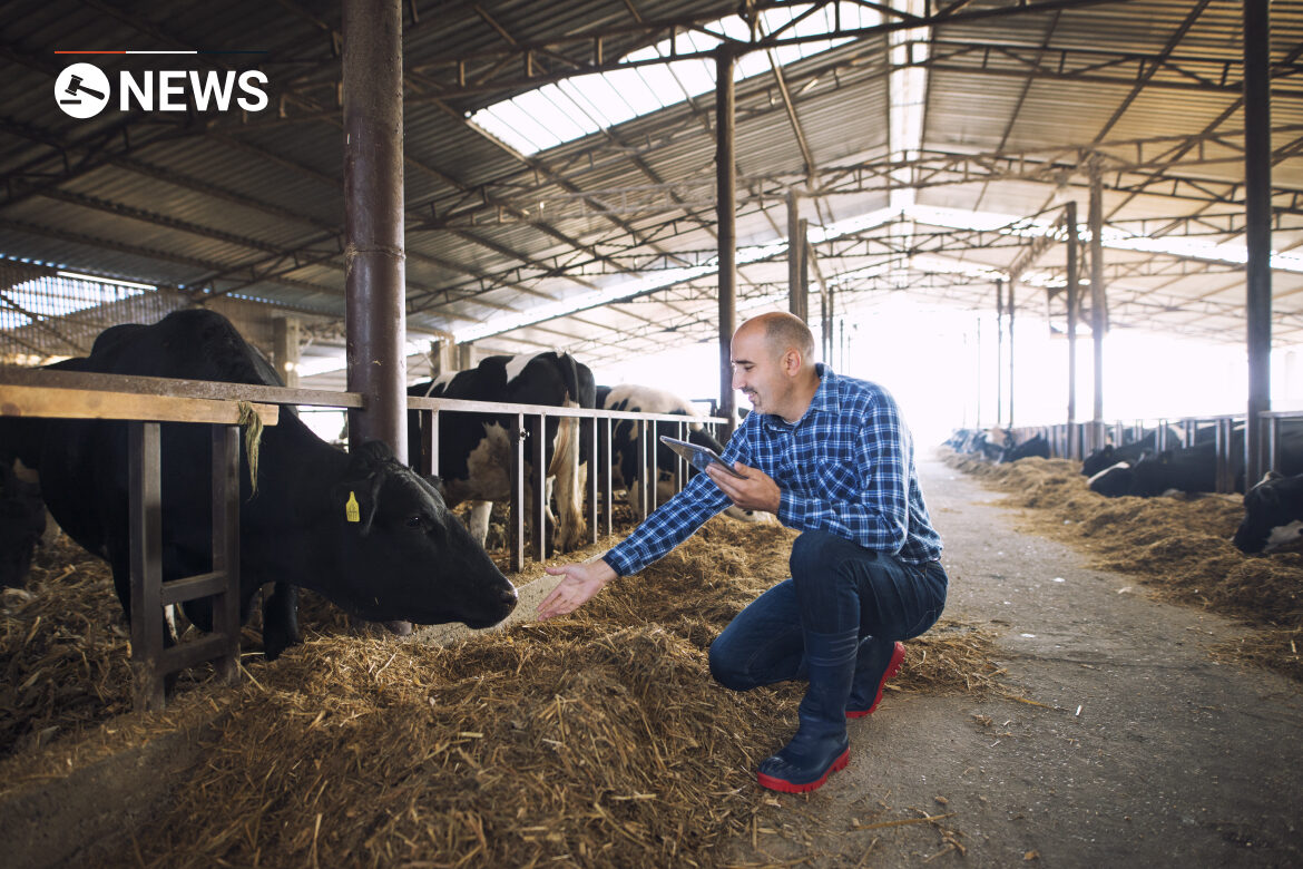 Urgent action needed to prevent shortage of dairy farm staff