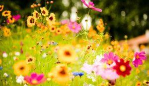 Religion & Astrology: पूजा में फूल क्यों चढ़ाए जाते हैं ? जानिए कौन से फूल से कौन से भगवान होते हैं प्रसन्न !
