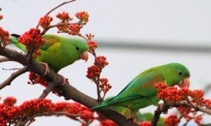 धर्म एवं आस्थाः जब भगवान श्री कृष्ण ने अर्जुन को पंछियों के बारे में एक रहस्य बताया ?