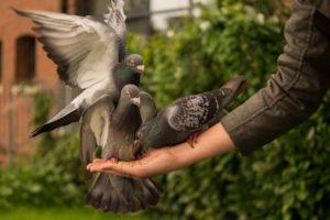 Blog: पशु-पक्षियों से यदि करते हैं प्यार, तो उनके दानापानी का भी रखें ख्याल, मिलेगी मानसिक शांति और ग्रह-दोष से मुक्ति…