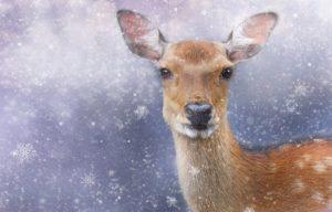 Way to Spirituality: जानिए एक दिन उस हिरणी के साथ क्या हुआ !