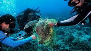"""Blog: # SAY GOOD BYE TO PLASTIC:  आखिर विश्व में कितने प्रतिशत """"प्लास्टिक कचरा"""" बना हुआ है गले की फांस ! जानिए क्या है नुकसान ?"""