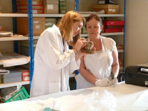nicola showing gill how to clean a dormouse