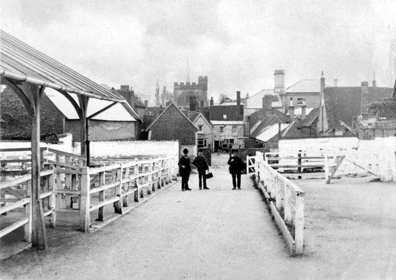 The livestock market was held in Bancroft until 1903, but part of it moved to a site between the back of The Cock Hotel and Paynes Park in the 1880s. The area is now used as a car park, although some of the fittings can still be seen along the northern boundary (the left side of this picture).