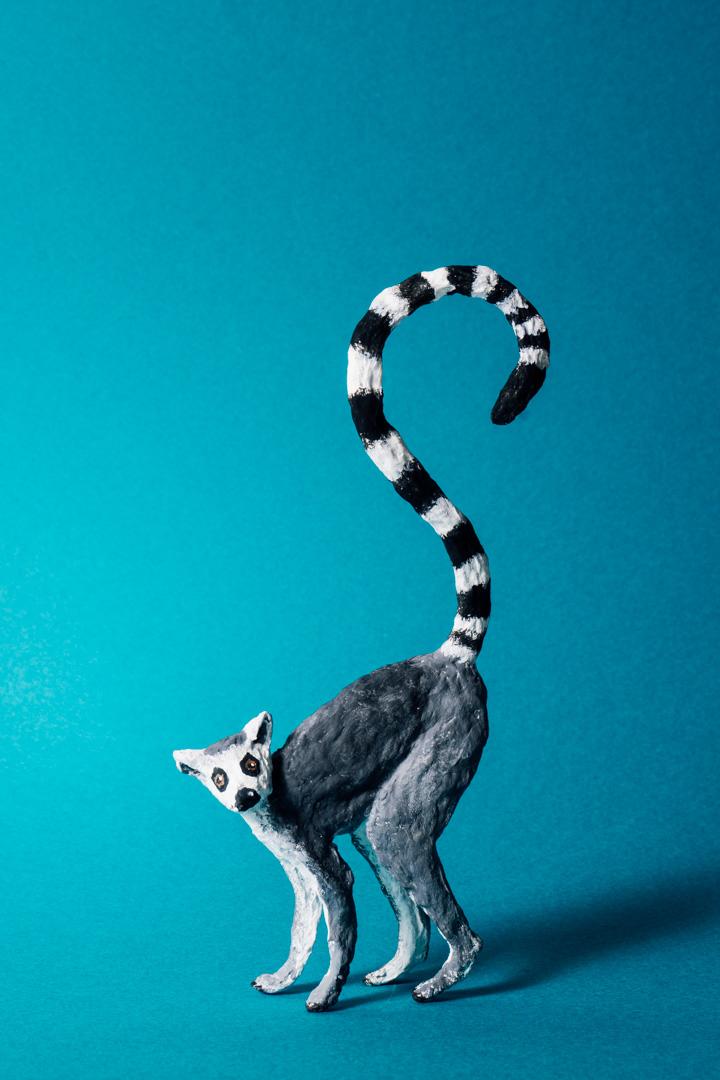 2020_02_03_Lemur00018