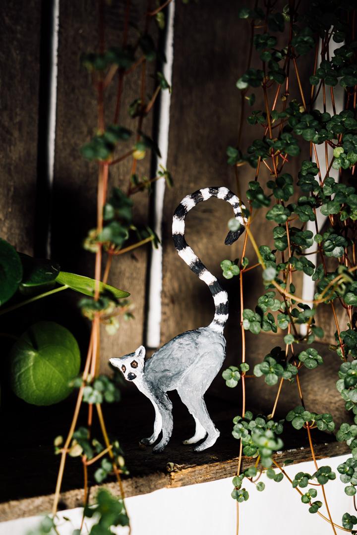 2020_02_03_Lemur00098