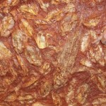 Fossil fish in Devonian rocks at Wincanalea, Australia