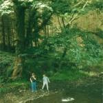 Exploring woodland