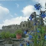 Blue Bells at Carew castle