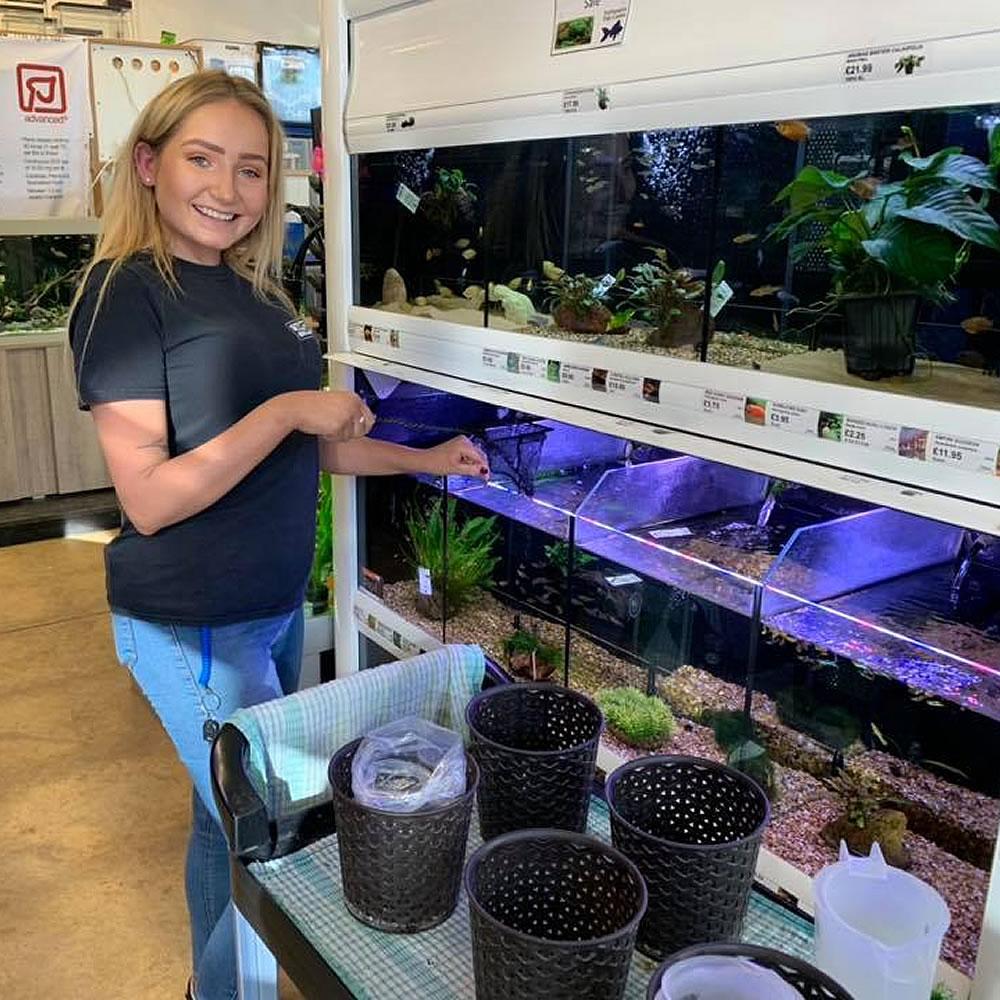 aquarium alys