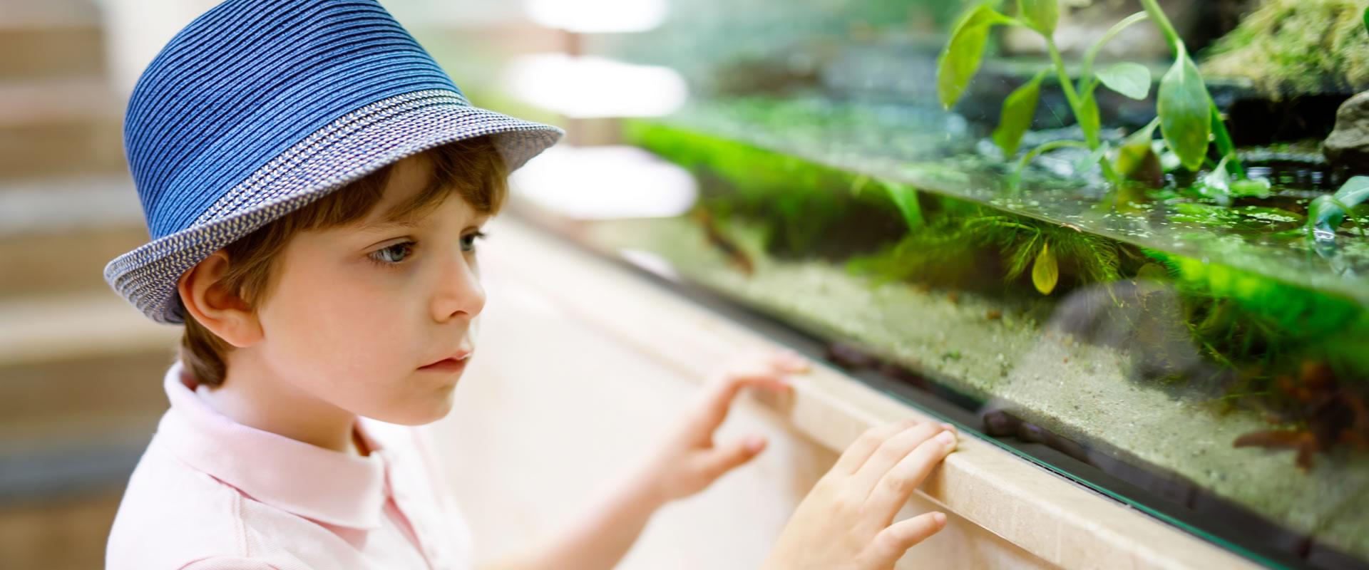 boy looking into aquarium