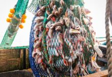 #Brexit: #Ministers #accused of #fishing_compensation #U-turn