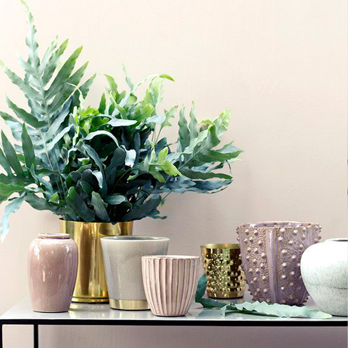Five Stylish House Plants for 2017