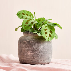 Rustic-Concrete-Planter-House-Doctor