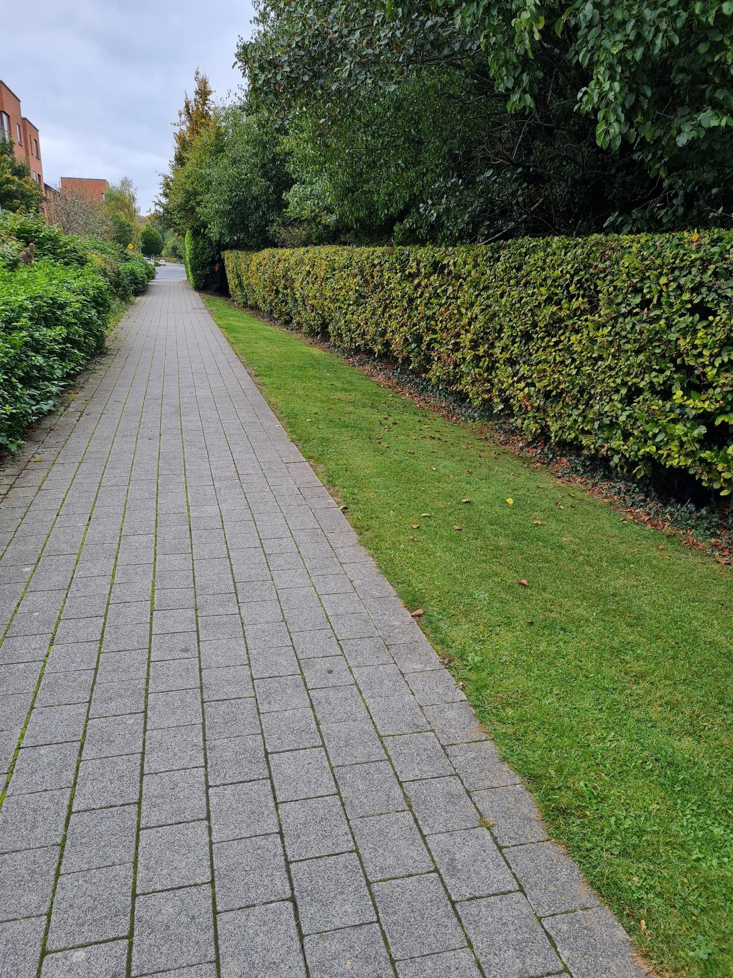 Path 3 rotated