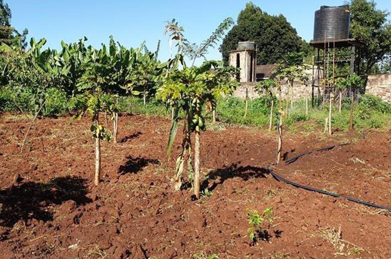 Water pump installed at a farm to irrigate papaya