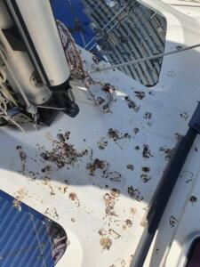 Mess on deck beneath the nest