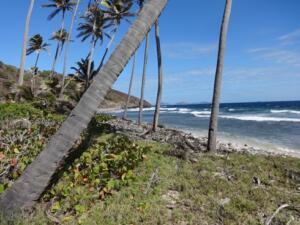 m_Atlantic coast of Petit Nevis