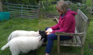 m_Hungry lambs