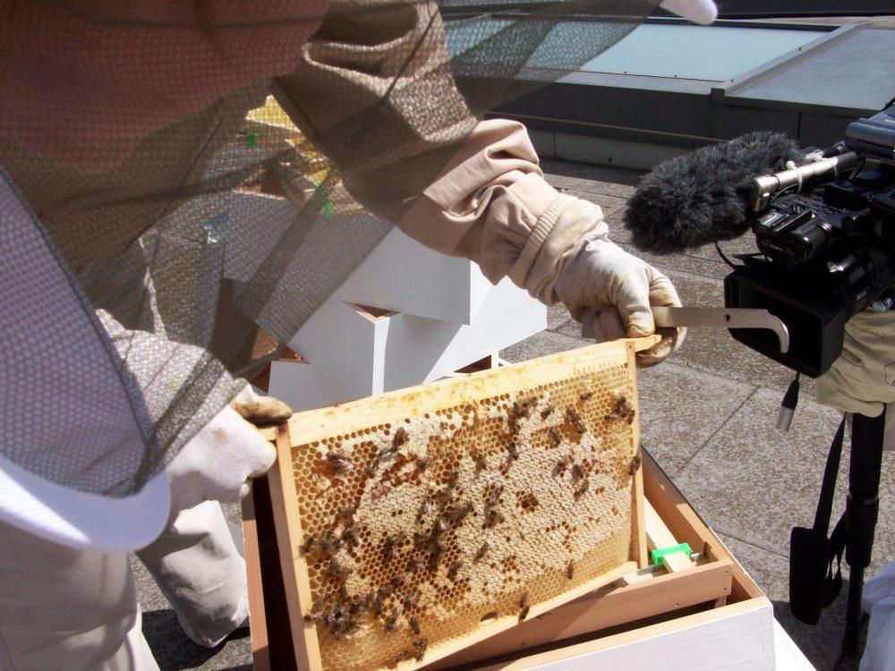 1-bee-hives-at-lancaster-london-1