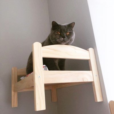cat cafe manchester bunk beds