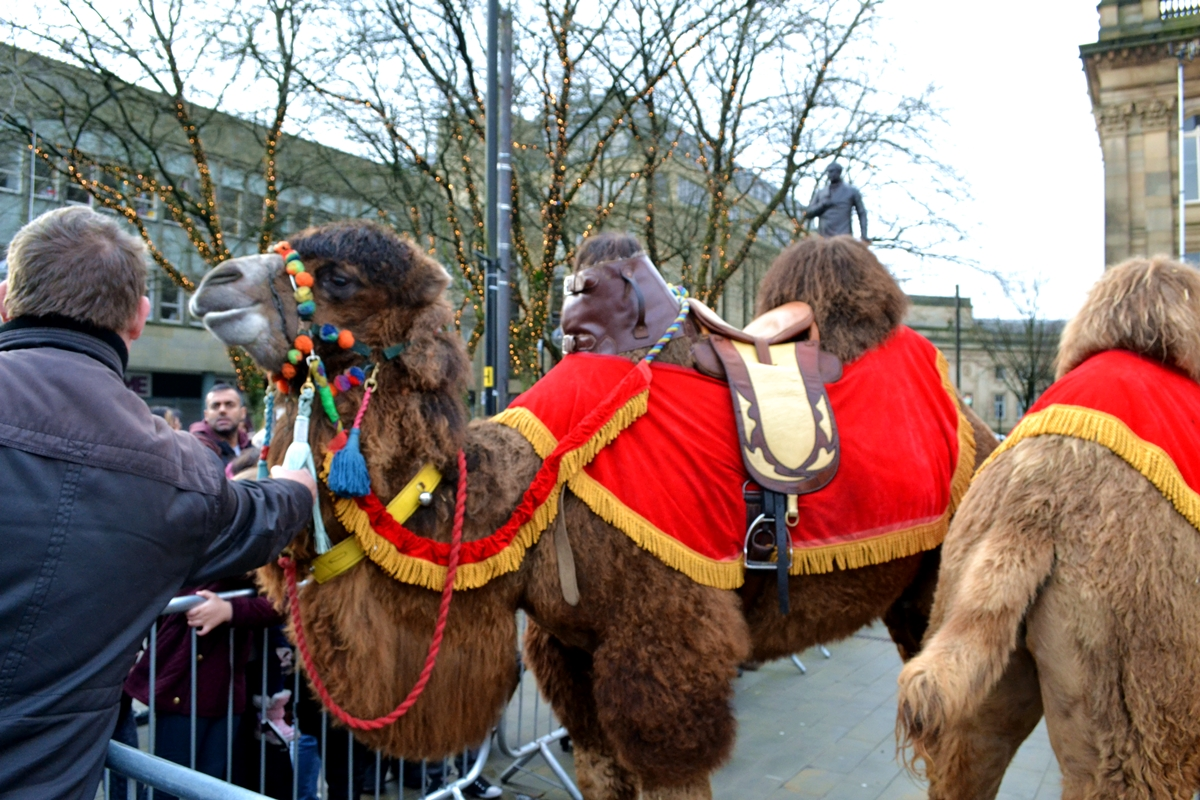 bolton council winter wonderland snow slide camels
