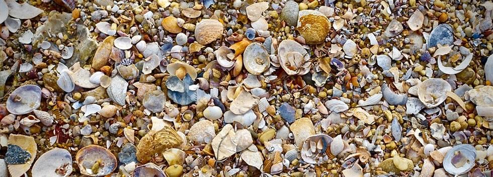 top 10 mermaid accessories beach shells