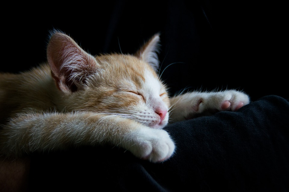 9 emotional stages of getting a cat or kitten