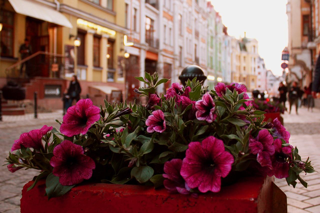 flowers in street