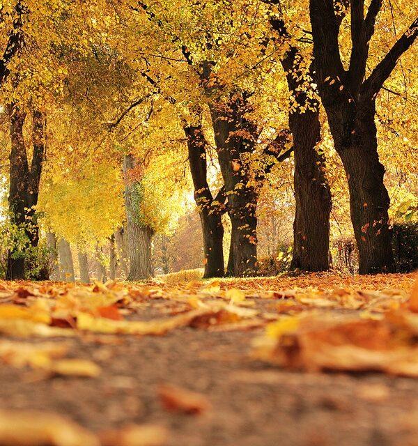 Ways to feel Autumnal 2017
