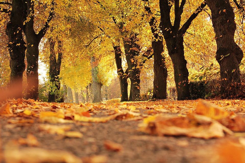 ways to feel autumnal autumn