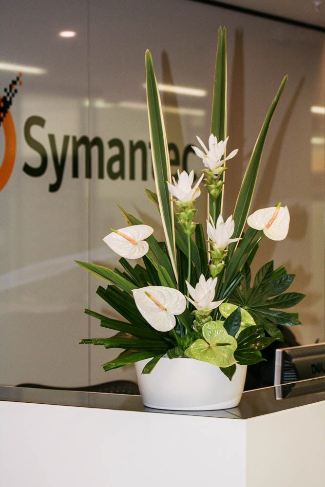 Architectural flower arrangement of white anthurium and curcuma on an office reception, created by Garland, London florist