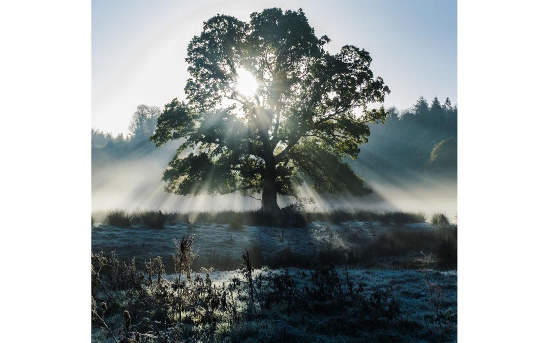 Light Scattering Through Tree