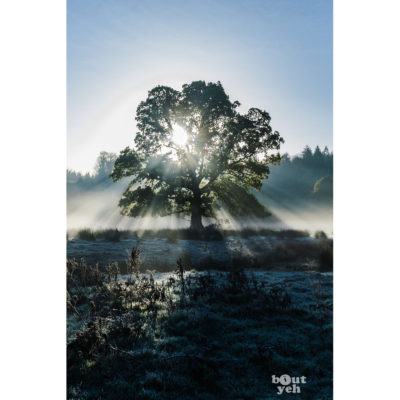 Light Scatter Tree 2, Northern Ireland. Ireland landscape photograph.