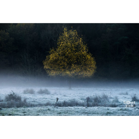 Pear Shaped Tree 2, Northern Ireland. Ireland landscape photograph.