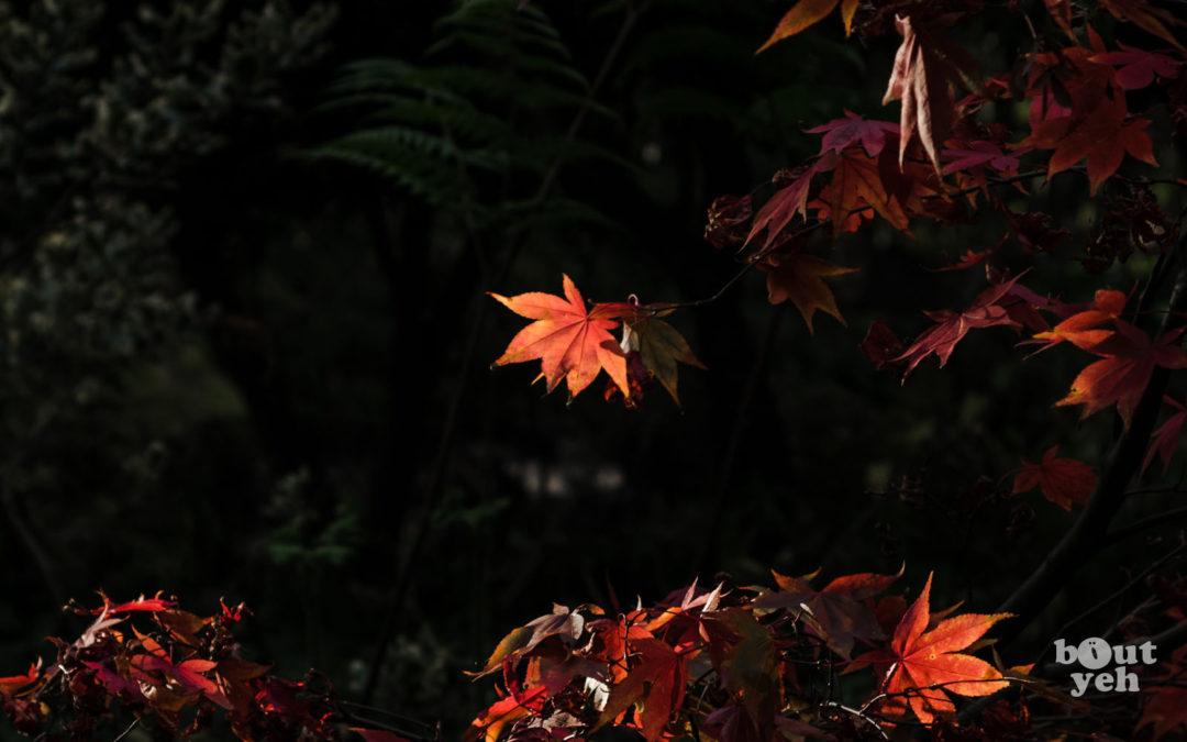 Rust Coloured Leaves