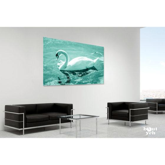 Swan and cygnet, Belfast Waterworks, Northern Ireland - photo in room setting.