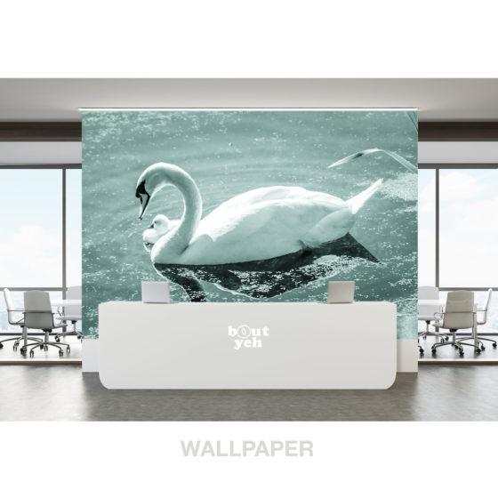 Swan and cygnet, Belfast Waterworks, Northern Ireland - photo wallpaper.