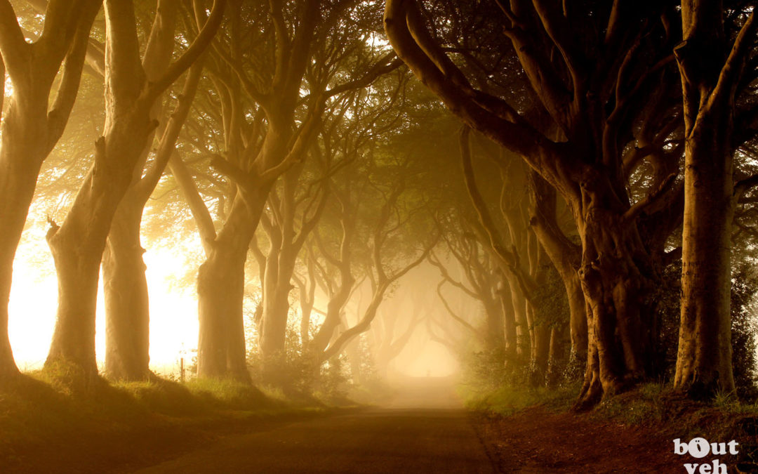 The Dark Hedges, Northern Ireland – gh