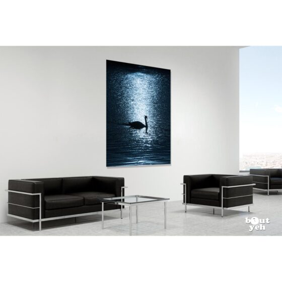 Photographs of Ireland for sale - Swan on water backlit by sun at The Waterworks Belfast, photo 1277 in room setting