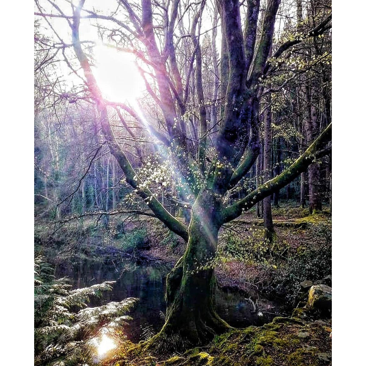 Bright sunlight reflected in water at Tollymore Forest Park, Northern Ireland - photo 1470