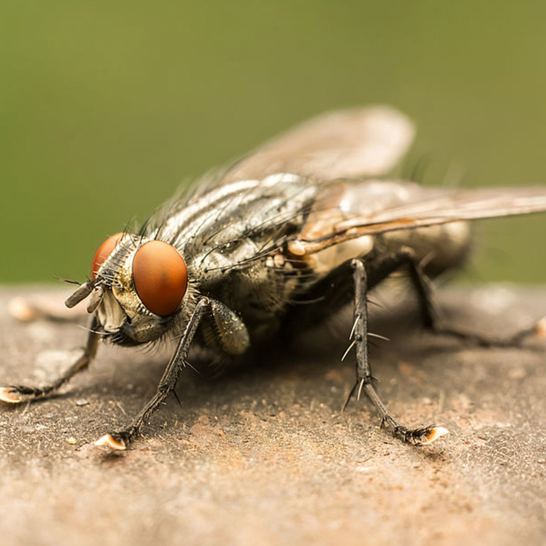 Flying Insect Control Service