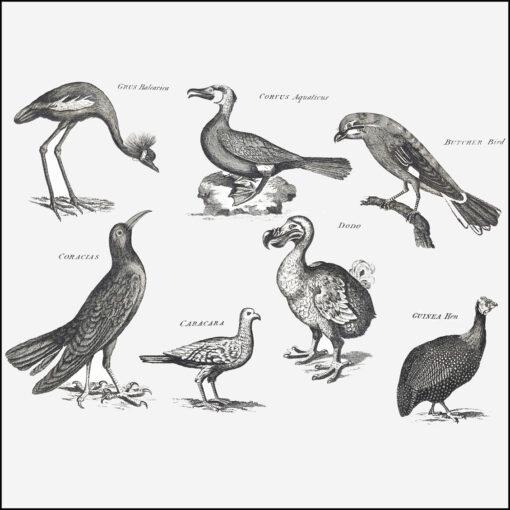 collage kit birds from Georgian Arts & Sciences Encyclopaedia